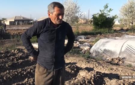 Գազանների մեջ գերի ենք․ Արարատի մարզում ողջ բերքը ցրտահարվել է, գյուղացիները շվարած են. ՏԵՍԱՆՅՈՒԹ