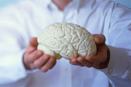 Գլխուղեղը 36 ժամ հաջողությամբ պահպանում է իր ակտիվությունը առանց մարմնի