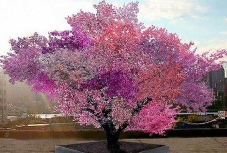 Տարօրինակ  այս ծառի վրա  աճում են շուրջ 40 տեսակի մրգեր (տեսանյութ)