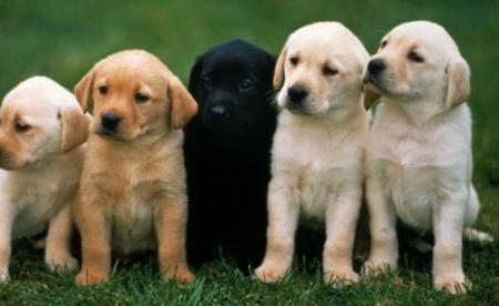Մահ՝ շան ձագի կծելուց․ բժիշկները կատաղության ախտանիշները շփոթել են տագնապի նոպայի հետ