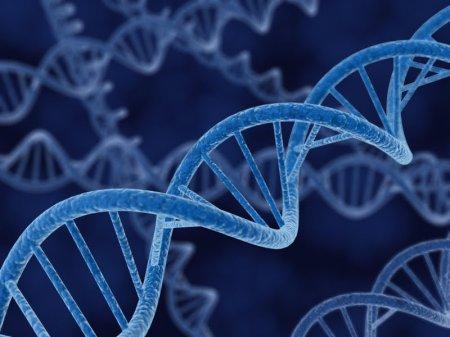 Այսուհետ ԴՆԹ-ն մեկ այլ մարդու փոխանցելու համար բավական է 10-վայրկյանանոց ձեռքսեղմումը