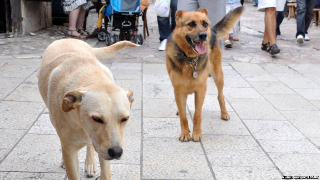 Երեւանում թափառող շունը հարձակվել է մանկապարտեզ հաճախող երեխայի վրա