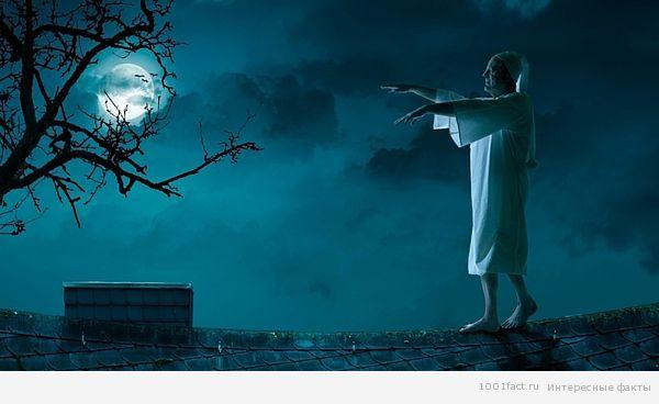 Ինչո՞վ են վտանգավոր քնաբերները. լուսնոտության դեպքերն են, որոնք ավարտվել են մահվամբ