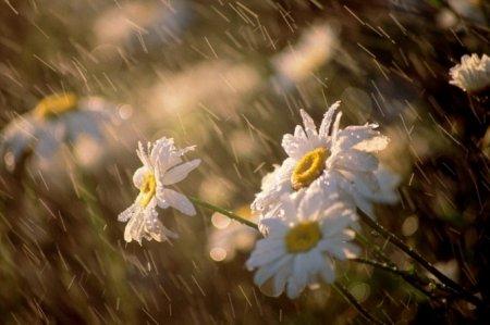 Ամենուրեք սպասվում է անձրև, ամպրոպ և  քամու ուժգնացում
